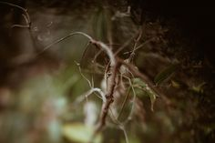 Photo by Tessa Cheetham  #leaves #plants #forest #nature #outdoors #green #bushes #trees #mountglorious #australia #photography #naturephotography #free-lens #free-lensphotography #freelensphotography