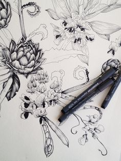 drawing by Adriana Picker, Sydney Illustrator