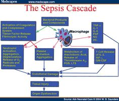 An expanded understanding of the complex pathophysiology of sepsis in infants may lead to novel therapeutic approaches in this population. Sepsis Pathophysiology, Pharmacology, Medical Surgical Nursing, Cardiac Nursing, Nurse Life, Rn Nurse, Infection Control Nursing, Np School, Nursing School Humor