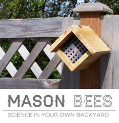 Mason Bees: Science in Your Own Backyard... Fascinating!