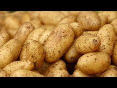 growing potatoes P Allen Smith Potato Barrel, Peeling Potatoes, Grow Potatoes, Storing Potatoes, Planting Potatoes, Russet Potatoes, Mashed Potatoes, P Allen Smith, How To Store Potatoes
