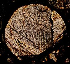 NWA 305 meteorite thin section viewed through a polarizing microscope