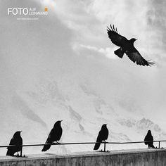 Raven bird photography freedom New ideas Waylon Lewis, Vet Jobs, Raven Bird, Challenge The Status Quo, Credit Score, Cool Names, Vacation Trips, Travel Trip, Trauma