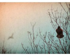 Red Winged Blackbird: photo notecard - blank with envelope. Printed on metallic photo paper. Also available as a canvas or print.