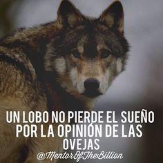 Bienvenido a la la comunidad de emprendedores que no pierde el sueño por nada!  @mentorofthebillion @thementorstore Motivational Phrases, Inspirational Quotes, Mentor Of The Billion, Quotes To Live By, Life Quotes, Wolf Quotes, Word Of The Day, Spanish Quotes, Love Words