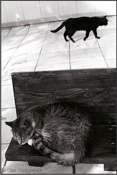 chat tigré endormi sur son banc et chat noir marchant dans la chatterie du Refuge