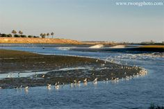 Bolsa Chica Ecological Reserve pictures
