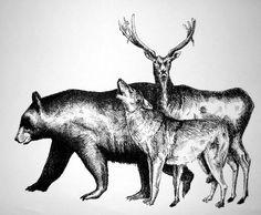 Bear Wolf Deer