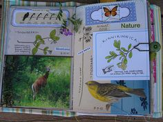 Montana Nature Remains of the Day pages | I saved the Remain… | Flickr