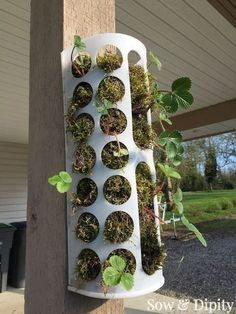 Turn an Ikea basket into a vertical garden! Perfect for strawberries, this quick video shows you how.