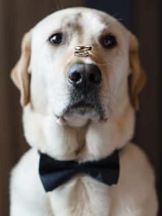 The wedding trends of 2020 have arrived! Get inspired by our roundup of the must-know themes, food, decor and other wedding trends for the new year. Bow Tie Wedding, Dog Wedding, Dream Wedding, Wedding Night, Fall Wedding, Rustic Wedding, Wedding Gifts, Wedding Ring, 2016 Wedding Trends