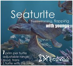 seaturtle trans youngs