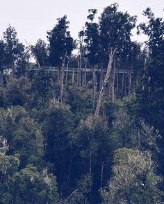 Over the tree tops  #treetopsnz #newzealand #southislandnz #adventures