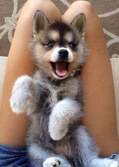 ahhh adorable
