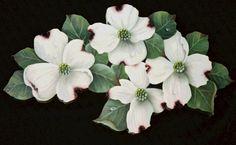 "Dogwood Blossom Drawings | Dogwood Blossoms"""