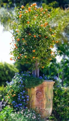 Tips for Growing Potted Fruit Trees - Use a straight edged large planter, so if you have to repot as your tree grows, it will be easier to remove. Underplant with flowers - they not only look & smell beautiful but bring in the bees to help boost pollination = more fruit at harvest time. More tips @ http://themicrogardener.com | The Micro Gardener