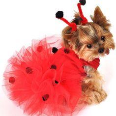 одежда для собак - Поиск в Google