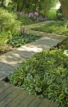 This is what we've decided to do, between the house and the woods... a raised boardwalk.