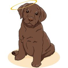 Chocolate Labrador Retriever Angel t-shirts