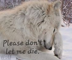 Please don't let me die. Those words are so sad. Wolves have families too!