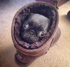 This Pugg who redefined comfort in 2014. | The 38 Most Majestic Pugs Of 2014