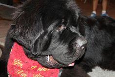 Posibilidad de viajar con tu mascota a una de nuestras casa rurales en Candeleda-Gredos www.lunacandeleda.com