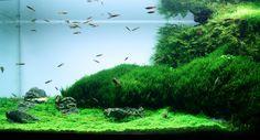 aquascape | aquascape 1 aquascape 2