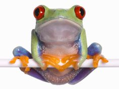 Tree frogs have pads at the ends of their fingers and toes. These pads help in climbing because they're rough and covered with a sticky secretion.