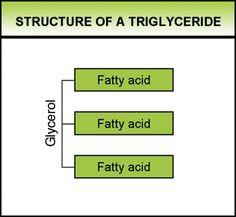 triglyceride fatty acid three attached to glycerol