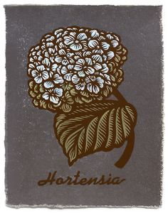 Hortensia ~ Martin Mazorra ~ Woodcut and letterpress print on color handmade paper, custom made in Brooklyn at Carriage House Paper. Dark brown ink. Paper varies in texture. Edition of 20. 11 x 14 inch, 2014