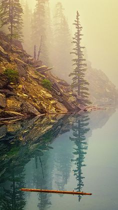 Tree In The Fog - Joan Carroll   #foggy #fog #reflection #morainelake #canada #nationalpark