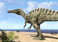 """12 feet tall and weighing five tons, a carnivorous theropod dinosaur of the genus Suchomimus wanders a beach on the ancient Tethys Ocean 115 million years ago in search of its next meal in what today is Northern Africa. A ferocious predator nearly as big as T-Rex with a crocodile-like head, Suchomimus (""""crocodile mimic"""") may have lived largely on fish and carrion. - Walter Myers - Prehistoric life"""