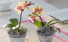 Így tartsd életben az orchideát!