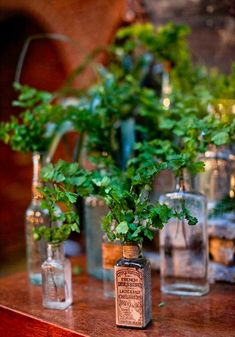 Greenery in Apothecary Bottles