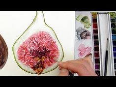 How to paint a realistic, velvety fig in watercolour with Anna Mason - YouTube