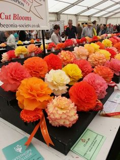 Begonias as big as your head!