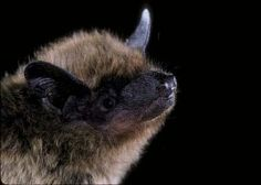 Conserving the world's bats and their ecosystems to ensure a healthy planet Bat Conservation International, All About Bats, All Bat, Virtual Museum Tours, Bat Species, Animal Totems, Great Friends, Girl Scouts, Beautiful Creatures