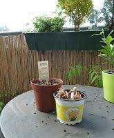 Gemüse & Naschen: Blumenzwiebelpflege