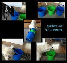 Hondenhersenwerk