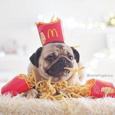 Thank God for McDonald's! They have real Pug food! Thank God for McDonald's! They have real Pug food! Super Cute Puppies, Baby Animals Super Cute, Cute Baby Dogs, Cute Little Puppies, Cute Dogs And Puppies, Cute Little Animals, Cute Funny Animals, Funny Dogs, Pug Dogs