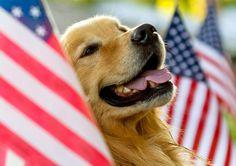 Patriotic pride is golden
