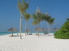 Kuredu Island Resort & Spa:                   Sandbank sun beds