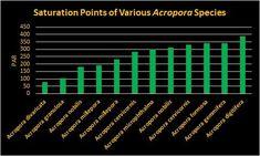 PAR Saturation Point of various Acropora species Aquarium Led, Reef Aquarium, Planted Aquarium, Aquarium Lighting, Acropora Coral, Radiant Energy, Led Fixtures, Photosynthesis