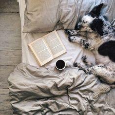 comfy Dog Houses, Happy Weekend, Weekend Vibes, Appaloosa, Mans Best Friend, Belle Photo, Animal Photography, Photography Office, Photography Ideas