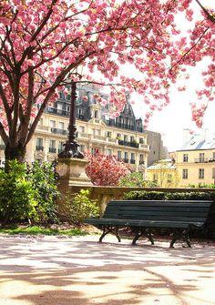 blossoms in the park, paris