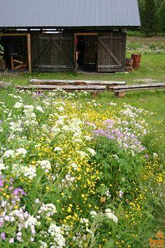 Smith workshop Finland, Workshop, Traditional, Explore, Country, Plants, Atelier, Rural Area, Work Shop Garage