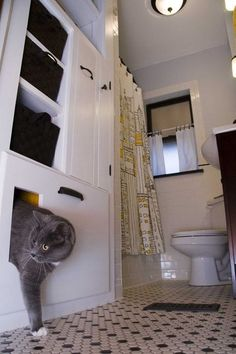 DIY Pets: litter box in the bathroom!