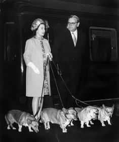 Queen Elizabeth arrives at King's Cross railway station in London with her four corgi dogs after vacationing at her Balmoral Castle in Scotland in October 1969.