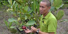 Guyana promete proteger más bosques para cumplir con acuerdo