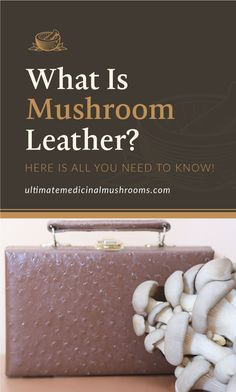 If you have not tried using a mushroom leather yet, it's time you give it a go. It's a sustainable and a durable leather, and it is very possible to make at home. This is a fabric that you should definitely check out if you want something newer and more eco-friendly alternative. | Discover more about medicinal mushrooms at ultimatemedicinalmushrooms.com #growingmushroomsforprofit #growingmushrooms #medicinalmushroom #mushroombenefits